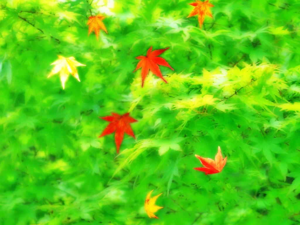 緑色 癒し系壁紙 ゆとり生活社