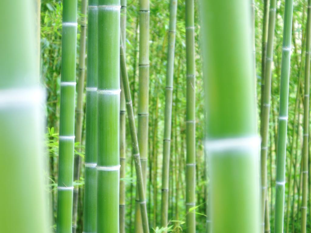 竹の画像 p1_21